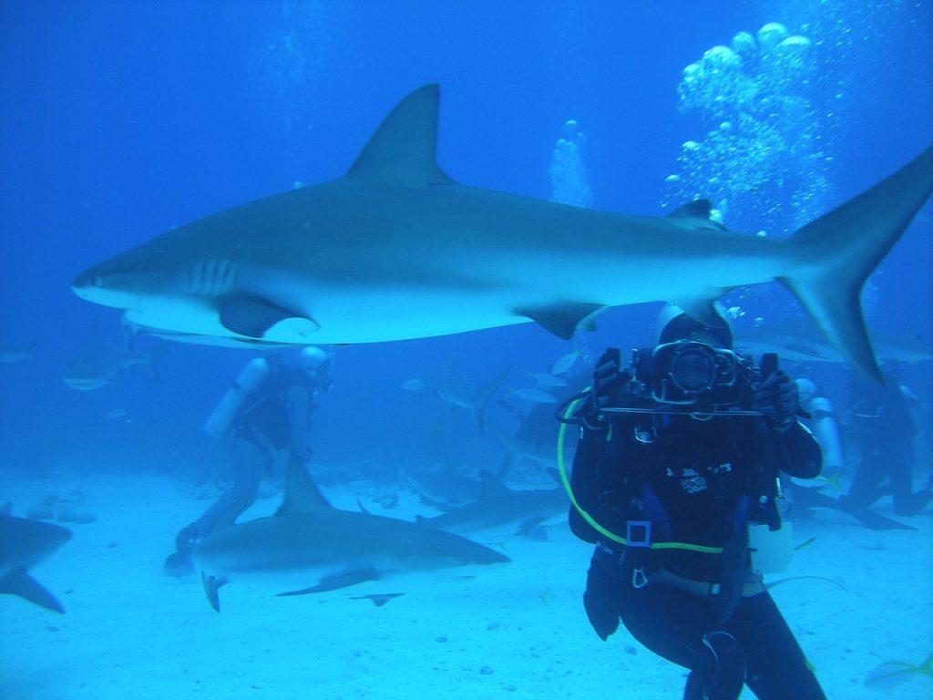 plongée sous marine aux bahamas