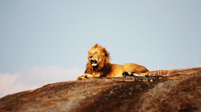 evisa-tanzanie-safari